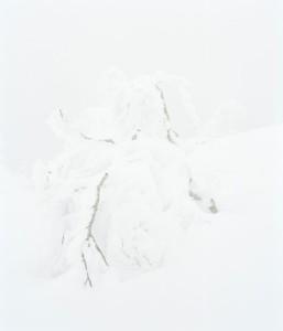 """gravity"" Hayato Wakabayashi photography"